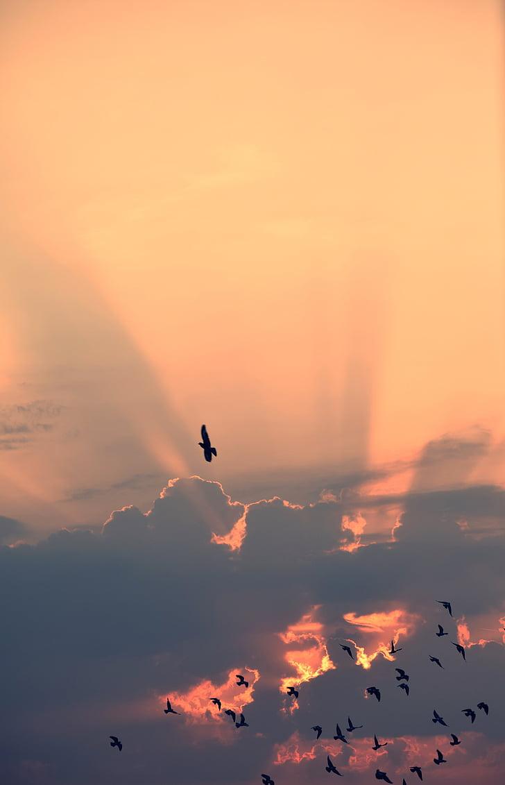 облак, Съншайн, небе, птици, залез, средата на въздуха, плаващи
