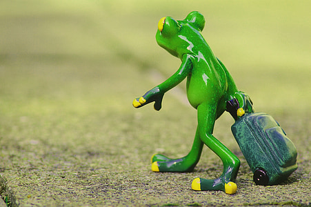 frog, farewell, travel, luggage, holdall, go away, holiday