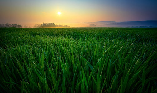 Alba, camp, natura, boira, paisatge, sol, matí