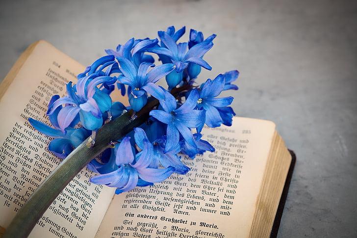 bunga, eceng gondok, biru, wangi bunga, bunga, biru bunga, schnittblume