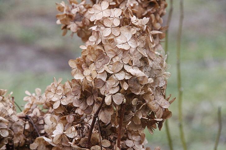 jesen, kraj ljeta, suhe biljke, jesenje lišće, suha, suhe trave