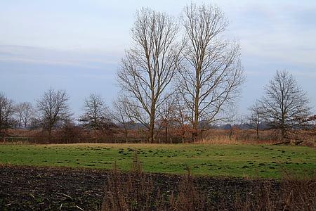 tuds, camp, arbres, paisatge, cel