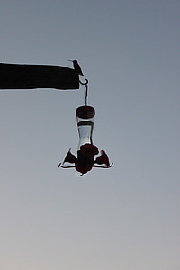 silhouette, dusk, hummingbird, hummingbird feeder, feeder, bird, tiny