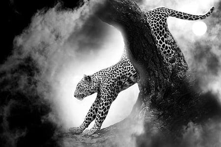 leopard, cat, predator, animal, fast, animal world, fur
