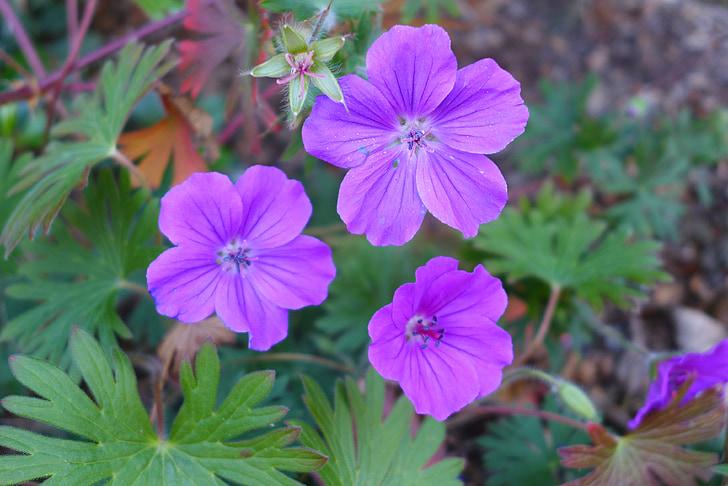 flowers, purple flowers, nature, summer flowers, wild flower, purple, flower