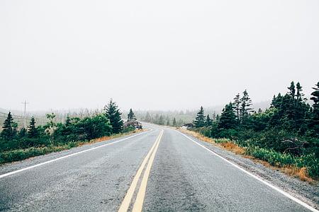 carretera, arbres, plantes, carril, camí, boira, núvols