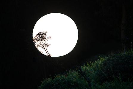 la nit, llum de lluna, nit, silueta