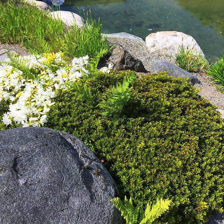 Roca, molsa, l'aigua, natural, primavera, verd, planta