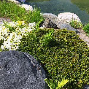Rock, Moss, vody, prírodné, jar, Zelená, rastlín