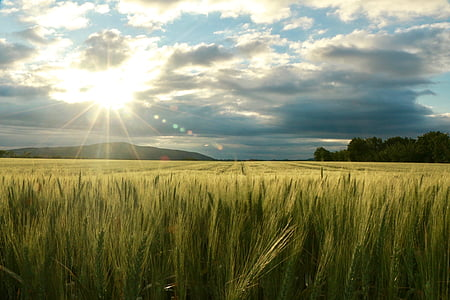 field, sun, nature, clouds, sunset, agriculture, growth