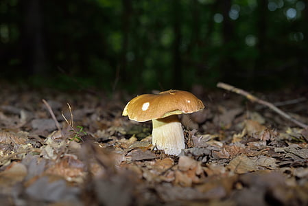 грибы, Гриб, лесные грибы, лес, Осень, Природа
