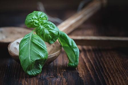 basilico, foglie, pianta, Spezia, verde, erbe, foglia