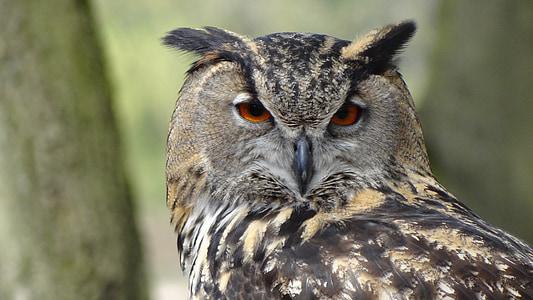 올빼미, 독수리 올빼미, 숲, 밤, 새, 숲, 깃털