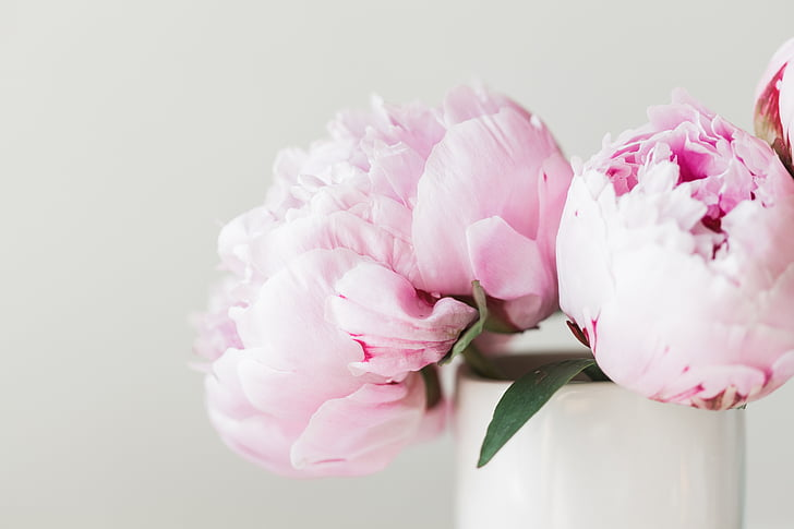 peonies, pink, flower, floral, summer, bouquet, celebration