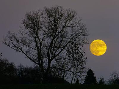月, 満月, 月の出, 今晩, ミステリー, 月光, ツリー