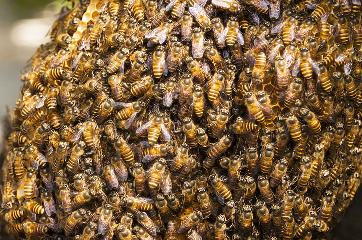 honey, bee hive, bee, insect, hive, honeycomb, swarm