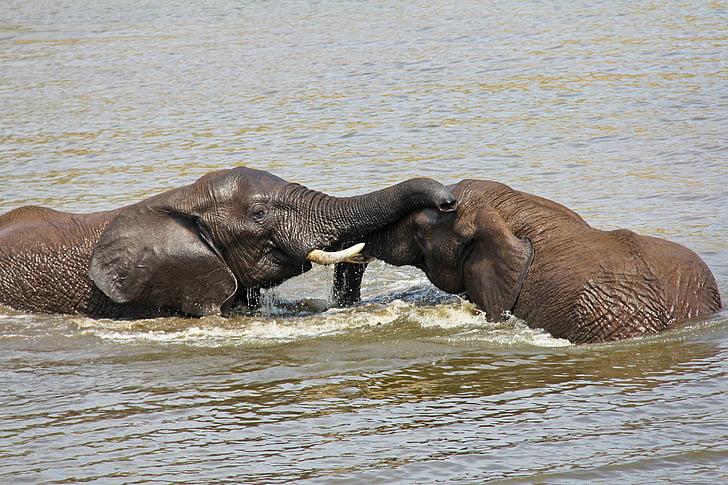 Elefanten, spielen, Wasser, spannende, Abenteuer, Safaris, landschaftlich reizvolle