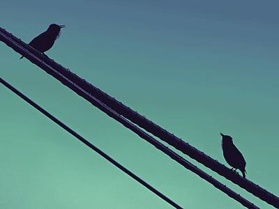 birds, singing, starling, cable, dialogue, black bird, bird