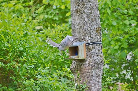 Dove, lintu, sulka, eläinten, höyhenpeite, siipi, kaupungin kyyhkynen