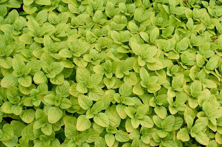 fulles, fulla, primavera, verd, paper d'empaperar, jardí, vibrants