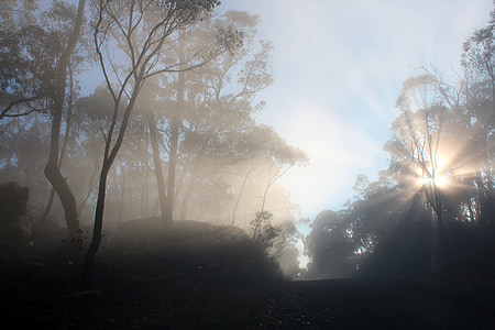 Sunbeam, sol, estat d'ànim, llum, natura, torna la llum, efecte llum