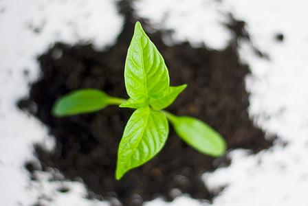 l'agricultura, en forma de bola, Ecologia, medi ambient, ambiental, flora, jardí