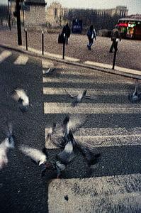 flock, duvor, nära, Street, fågel, fåglar, staden
