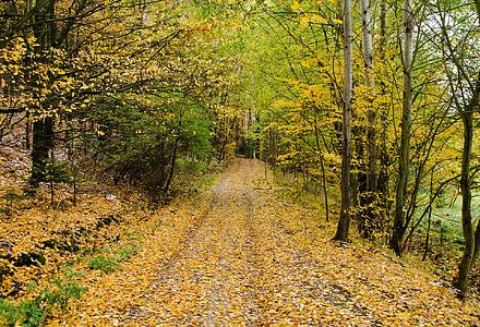 tardor, carretera, bosc, camí, caminant, natura, temporades