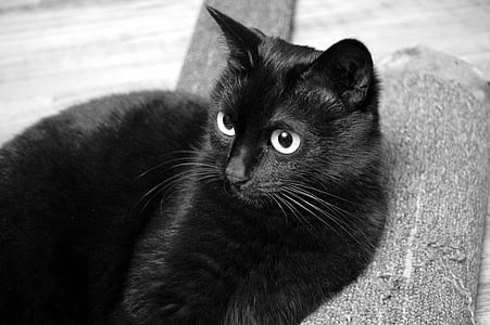 cat, black cat, view, pet, black, cat person, fur