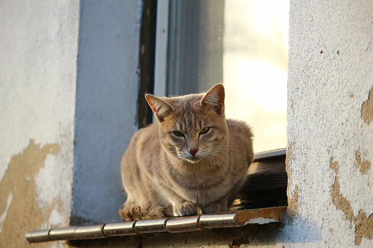 gat, Verat, finestra, tardor, resistit, calç guix, ampit de finestra