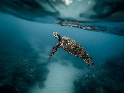 写真, 海, カメ, 水中, 海, ブルー, 水