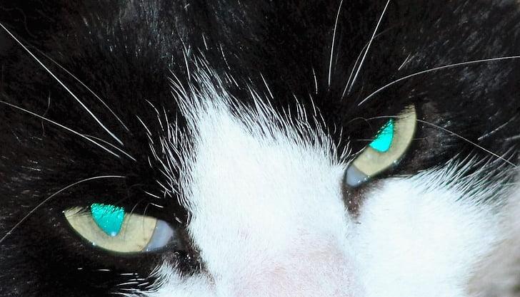 cat's eye, dangerous, eye, cat, face, portrait, pets