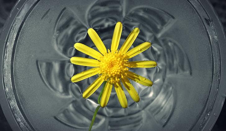 gėlių vanduo, gėlė, geltona, Gamta, vandens