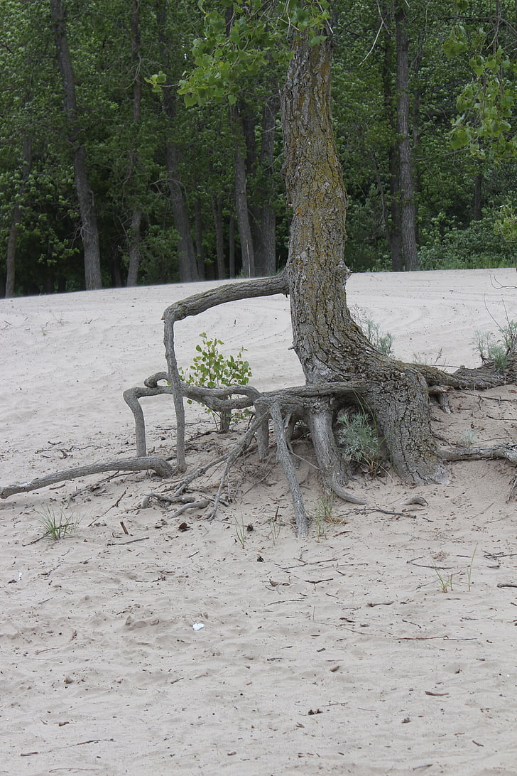 arrels dels arbres, natura, resistència, persistència, medi ambient, fort, determinació