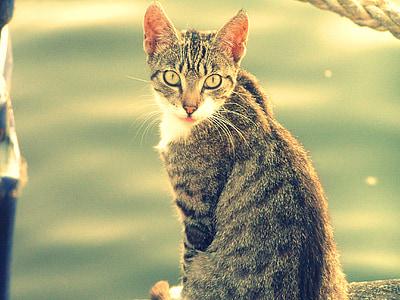 γάτα, γατάκι
