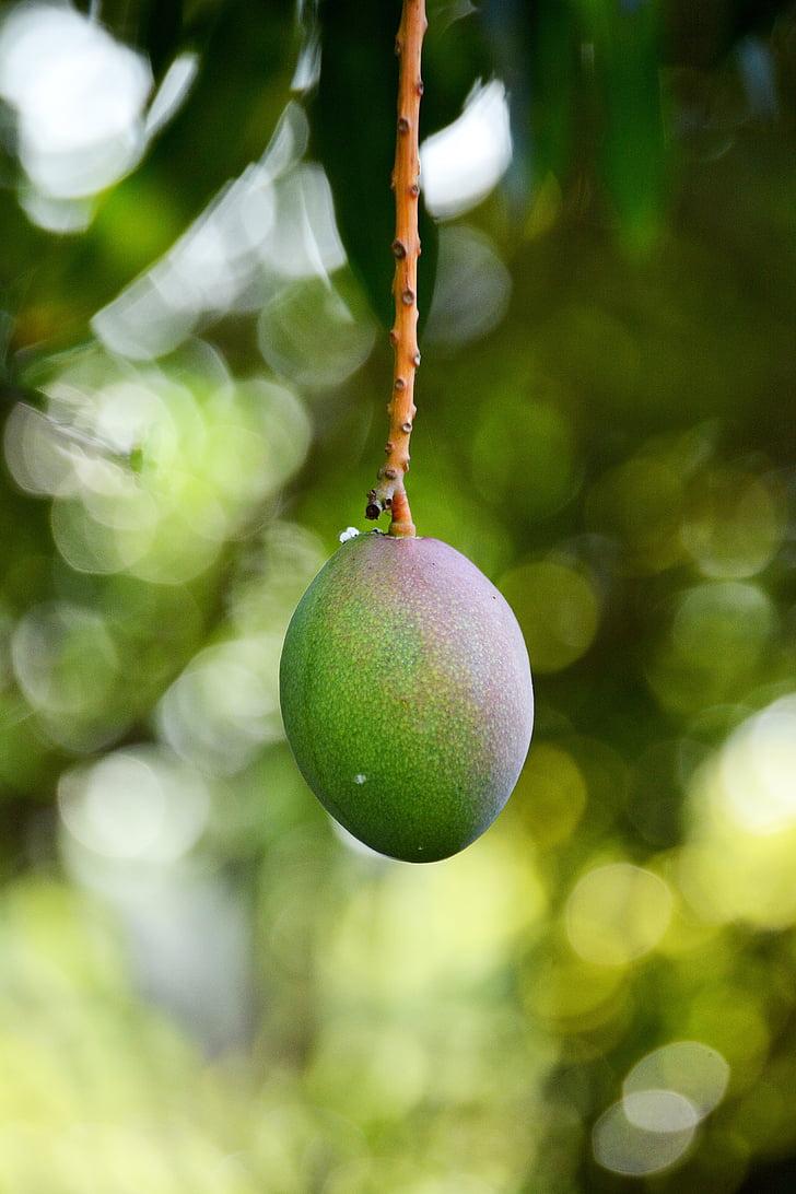 mànec, fruita, vegetals, aliments, tropical, planta, fruits tropicals