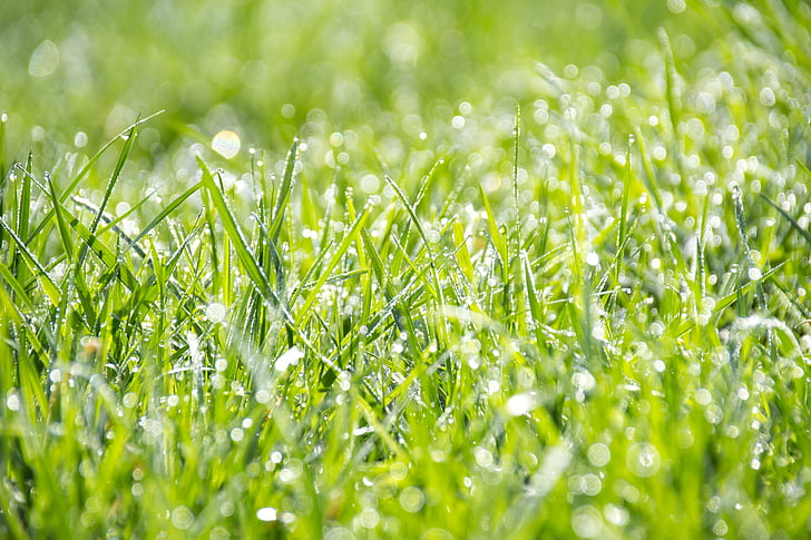 žolės, žalia, šviežumo, ekrano užsklanda, vasaros, Bokeh, ryškumo Gylis