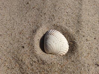 closca, sorra, platja, closca, platja de sorra, natura, Mar Bàltic