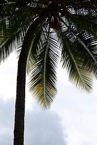 kokosová palma, Palm, palmy, palmový list, Kokos, pobrežie, morské pobrežie