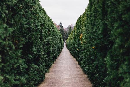 Príroda, Príroda, Zelená, tráva, Bush, dráhy, Gate