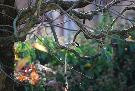 tit, small bird, songbird