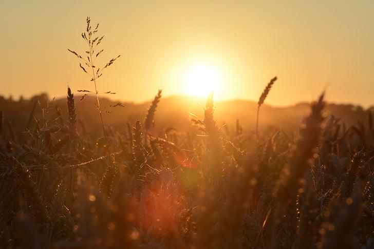 solen, fältet, landskap, Sky, naturen, fält, åkermark