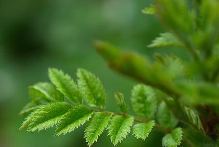 makro, bokeh, Natura, roślina, Zamknij, Fotografia makro, ćwiczenia