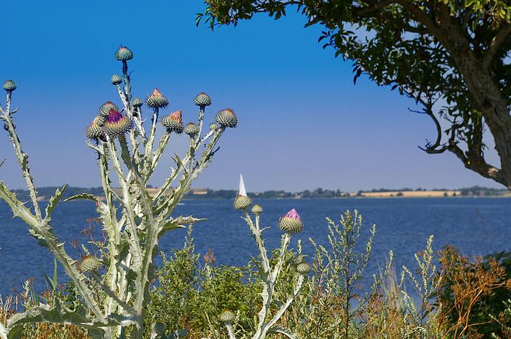 Rügen, aigua de vacances, Mar, ona, blau, platja, cel