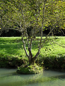 tree, water, field