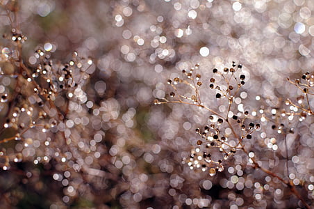 Bokeh, Close-up, embun, makro, hujan