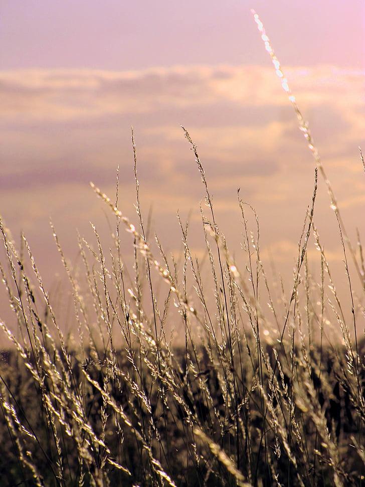gramínies, llum del sol, cel, estat d'ànim, natura, llum, ambient