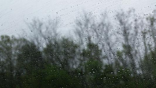 rain, weather, window, droplets, raining, wet, trees