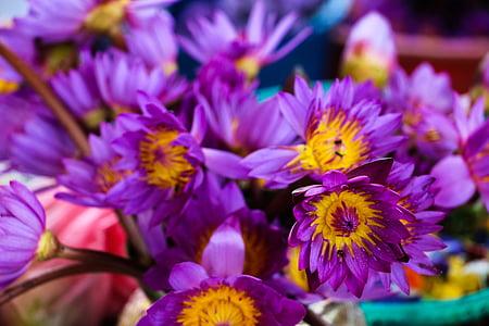 Lekno zblízka, kvet, Srí lanka