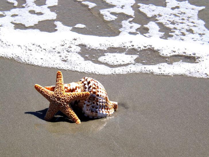 estrella de mar, closca, platja, Mar, tropical, oceà, sorra